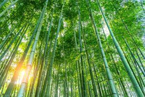 bamboo toothbrush materials